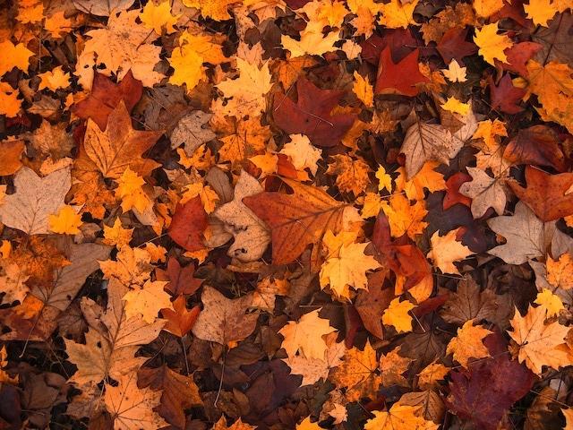 Foliage, per cogliere con discrezione la magia delle foglie che cadono